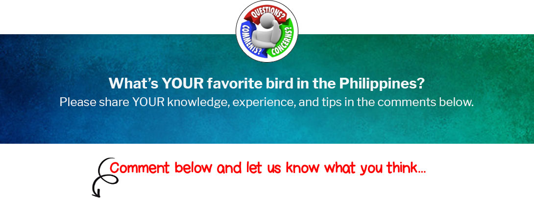 What's YOUR favorite bird in the Philippines?