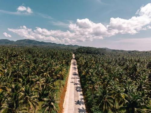 Palm Road in Siargao